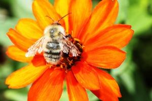 flower-123832_1920