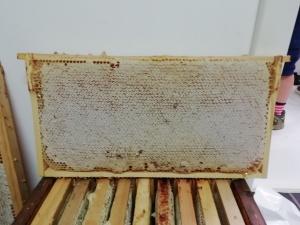 Wunderschön verdeckelte Honigwabe